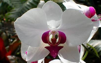 Orchid Wallpapers Backgrounds Walldevil Wallpapersafari Flower