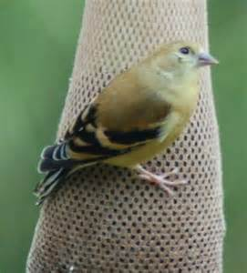 Northeast PA Birds Identification