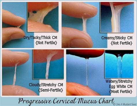Cara Agar Hamil You Tube Progressive Cervical Mucus Chart How To Know When You Are