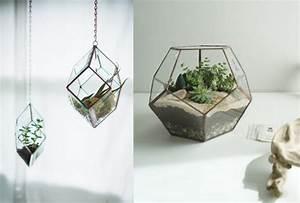 Plantes à Suspendre : les succulentes des plantes tr s d co joli place ~ Premium-room.com Idées de Décoration