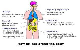 Human Body pH Balance