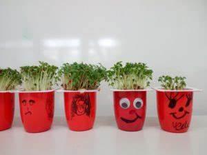 Was Brauchen Pflanzen Zum Wachsen : kresse was brauchen pflanzen zum wachsen paul dohrmann schule dortmund ~ Frokenaadalensverden.com Haus und Dekorationen