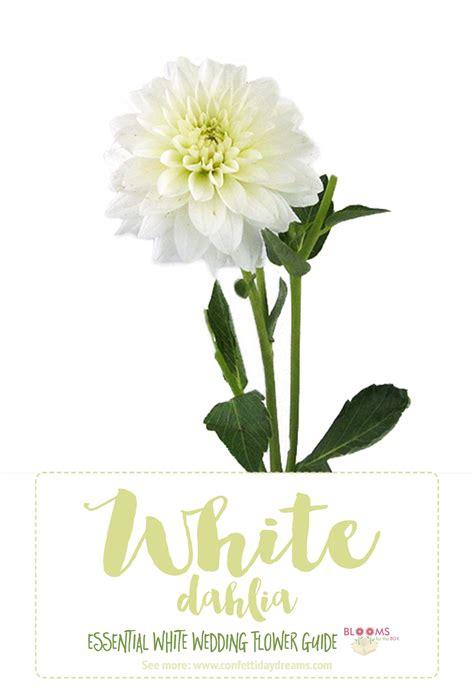 types  white flowers dahlia