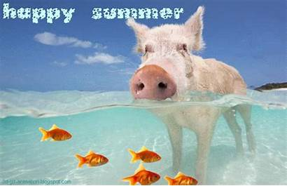 Summer Happy Animated Gifs 3d Cards Ecards