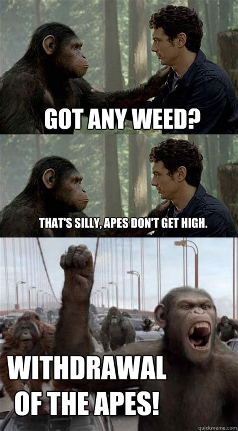 Ape Meme - got any weed that s silly apes don t get high withdrawal of the apes caesar is mad quickmeme