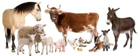 save farms animals world animal foundation