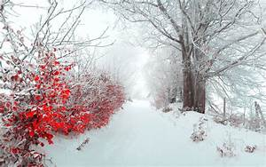 Landscape tree nature beautiful snow winter christmas f ...