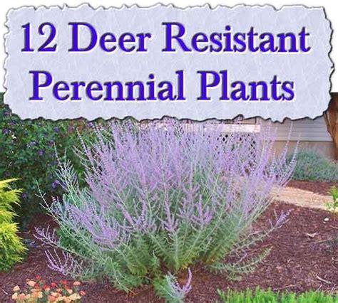 deer proof plants 17 best ideas about deer repellant on pinterest deer garden deer proof plants and plants in