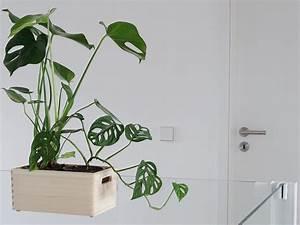 Pflanzen Zum Aufhängen : auf der mammilade n seite des lebens personal lifestyle ~ Michelbontemps.com Haus und Dekorationen