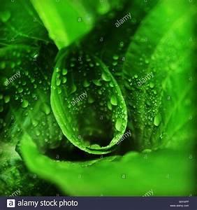 Pflanze Mit S : monochromatic stockfotos monochromatic bilder alamy ~ Orissabook.com Haus und Dekorationen