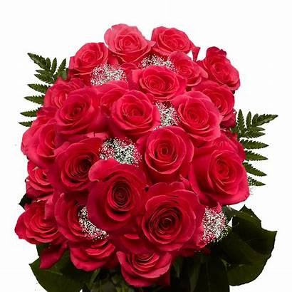 Roses Pink Dozen Flowers Fresh Bouquet Globalrose
