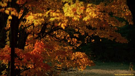 Autumn Tree Leaf Fall Animated Wallpaper - falling leaves gif