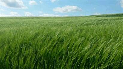 Grass Gifs Place Environment Tenor Modifiers Putting