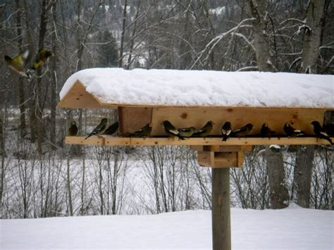 large bird feeder pictures