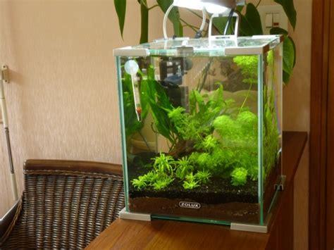 algexit de easy produit miracle ou arnaque le test page 7 aquariums et vivariums