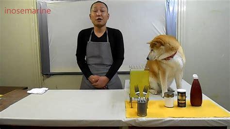 chien cuisiné cuisiner avec chien