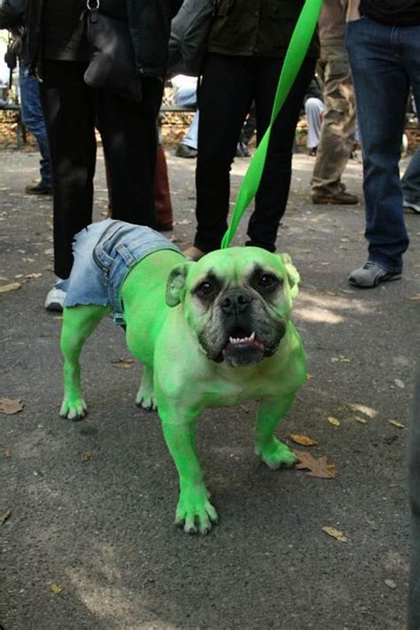 cute funny pet costumes   pics funnycom