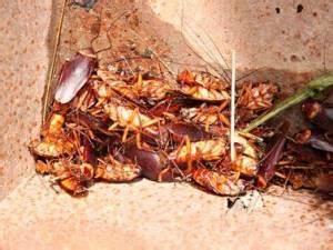 Chi bisogna chiamare per fare rimuovere un nido di vespe?