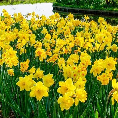 shop  months  yellow daffodils  brecks