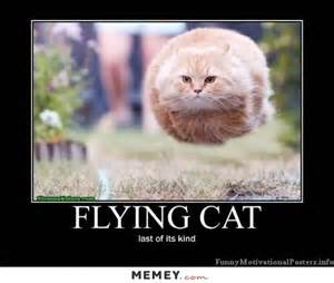 cat costumes flying cat memey