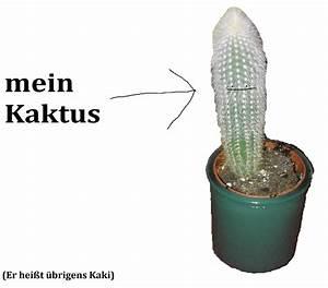 Alpenveilchen Gießen Wie Oft : wie oft muss ich kaktus gie en wasser pflanzen pflege ~ A.2002-acura-tl-radio.info Haus und Dekorationen