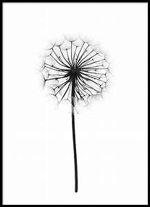 Pusteblume Schwarz Weiß Vögel : die 25 besten ideen zu pusteblume spruch auf pinterest herz bildcollagen spr che kalender ~ Orissabook.com Haus und Dekorationen