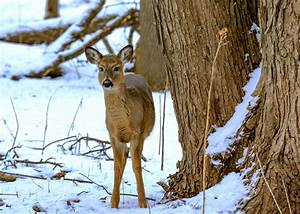 The World U0026 39 S Best Photos Of Minnesota And Wildlife