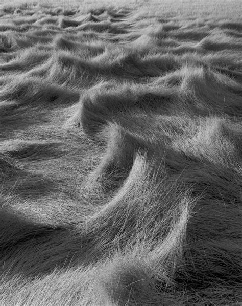 Fragile Waters: Photographs by Ansel Adams, Ernest H ...