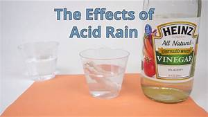 The Effects Of Acid Rain