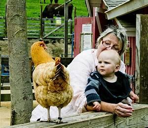 1000+ images about Tilden Little Farm on Pinterest