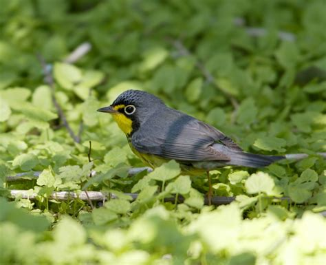 birds of canada funny animal