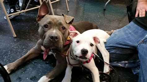 nyc soup kitchen offers food  people   pets