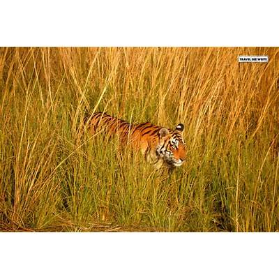 Welcome to the Circus - Ranthambore Jungle Safari India