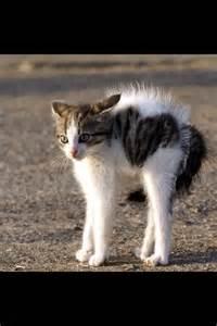 mini cat mini cat teacup mini pets