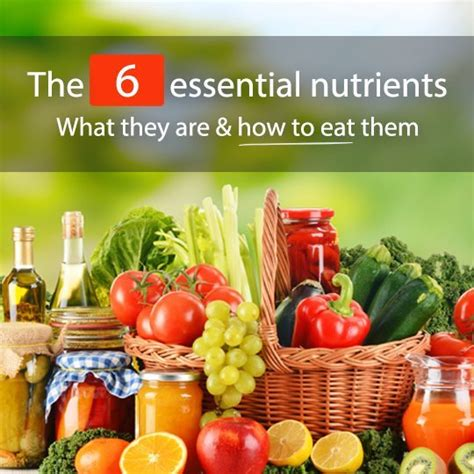 indispensable cuisine understanding the 6 essential nutrients how to consume them