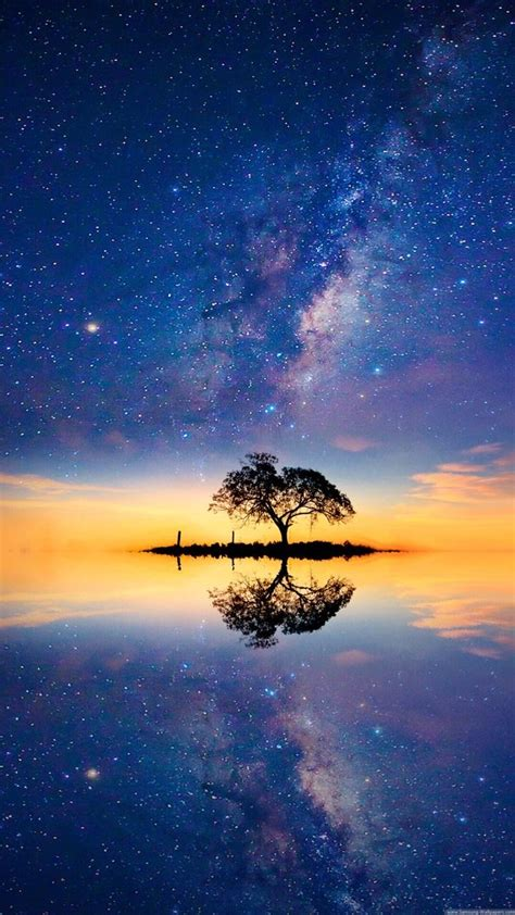 find beauty  tree hd wallpaper scenery