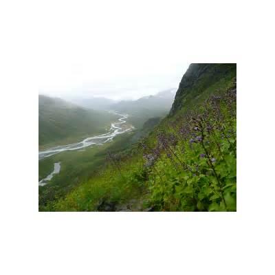 Flower path down the mountainSweden - Sarek National