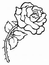 Coloring Pages Roses Rose Printable sketch template