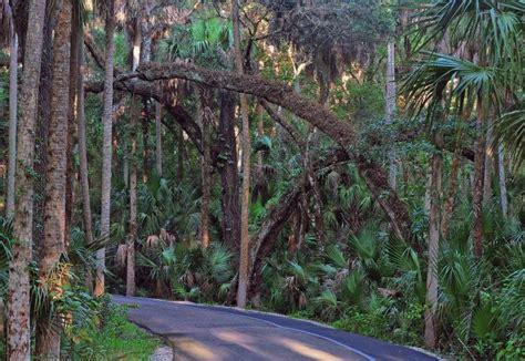 Highland Hammocks by Highlands Hammock State Park Florida State Parks