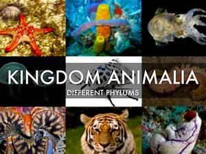 Kingdom Animalia by nrc0230
