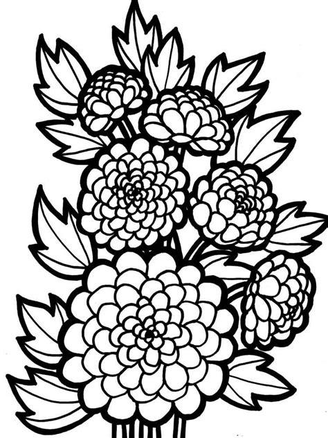 chrysanthemum coloring pages    print