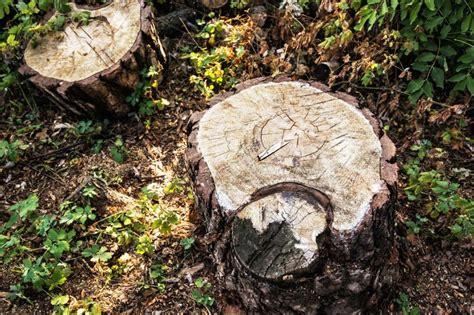 Pilze Garten Entfernen by Wichtige Gartentipps Im Fr 252 Hjahr Baumstumpf Entfernen So