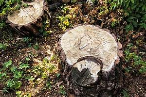 Baumstumpf Verrotten Beschleunigen : wichtige gartentipps im fr hjahr baumstumpf entfernen so ~ Watch28wear.com Haus und Dekorationen