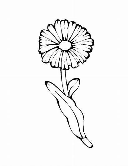 Coloring Daisy Flower Single