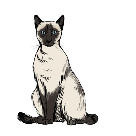 How To Draw A Siamese Cat 7 Steps (with Pictures) Wikihow
