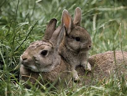 Bunnies Adorable Wallpapers