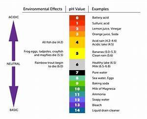 pH Scale - MissReyes8thgradeScience