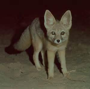 Animals That Live in the Desert for Kids
