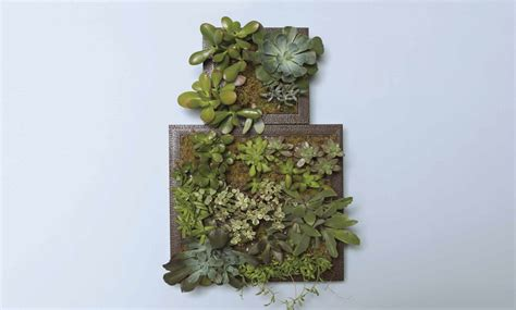 Vertical Garden Project by Make Your Own Vertical Succulent Garden Arrow Projects