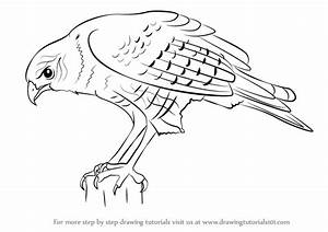 Learn How to Draw a Hawk (Bird of prey) Step by Step ...